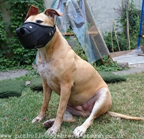 Muzzle for Staffordshire Bull Terrier Dogs, Leather and Nylon