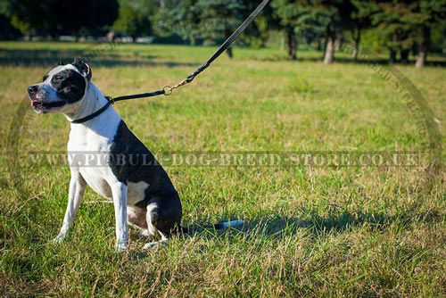 Leather Choke Collar for Gentle Pitbull Behaviour Correction