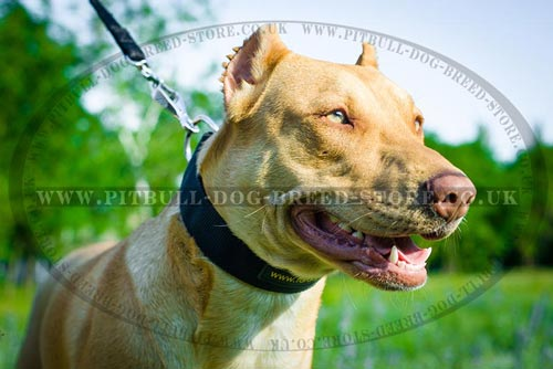 Pitbull Nylon Dog Collars