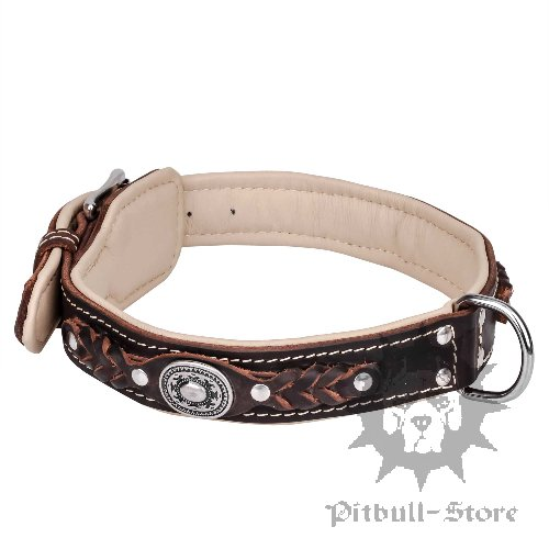 New Padded Stylish Dog Collar of Chic Design