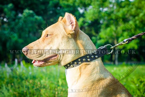 Stylish Dog Collar with 3 Rows of Conic Frustrums Studs