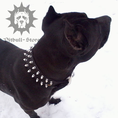Pitbull Collar Spiked with Nickel-Plated Barbs, Nylon