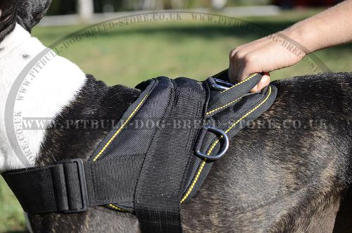 Bestseller! Nylon Dog Harness for English Bull Terrier