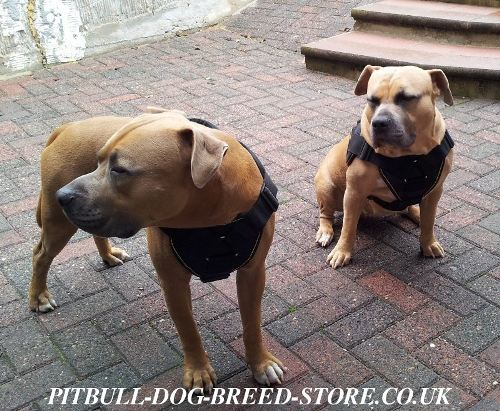 Bestseller! Staffy Harness of Strong Nylon with Padded Chest