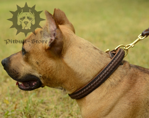Smart Braided Leather Dog Collar for Staffy and Pitbull