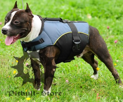 Perfect nylon dog vest-harness for Amstaff