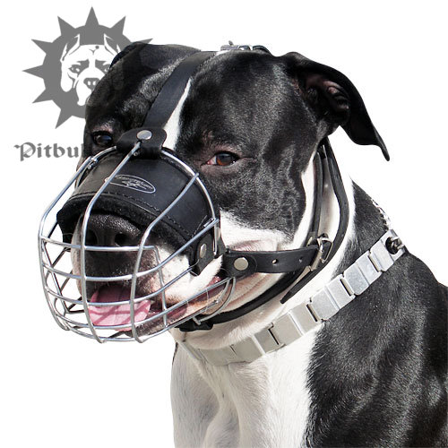 wire basket muzzle for pitbull