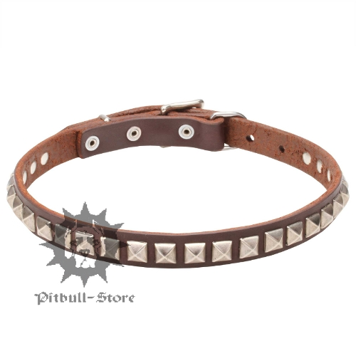 Narrow Pretty Dog Collar for Elegant Staffy and Pitbull