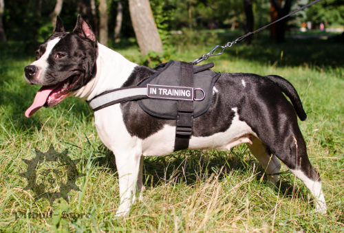 Reflective Dog Harness with Patches for Staffy Control, Nylon