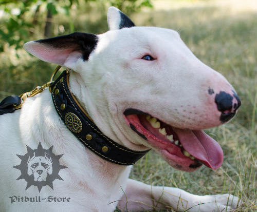 Royal Dog Collar for Bull Terrier, Nappa-Lined Leather