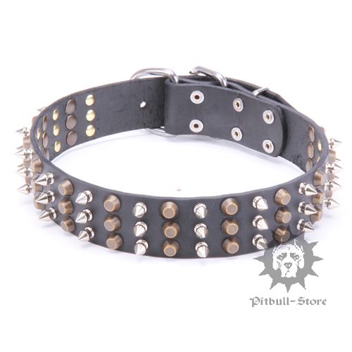 Studded Dog Collar for Bull Terrier - Style Bomb!