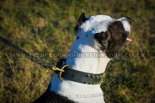 Spiked Pitbull Collar of Cool Impressive Design