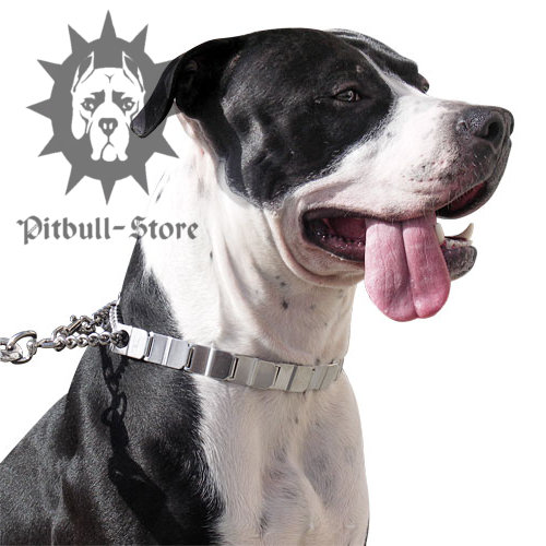 Neck Tech Dog Collar for Amstaff Obedience Training