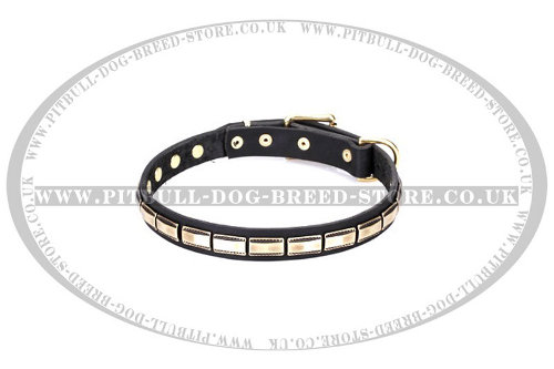 "Staffy Leather Dog Collar FDT Artisan ""Wealth Effulgence"""