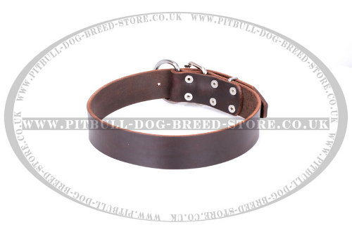 "Staffy Leather Dog Collar ""Calm Walk"" FDT Artisan of Brown Color"
