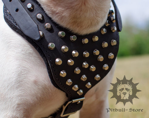 Studded Leather Dog Harness Padded for English Bull Terrier - Click Image to Close