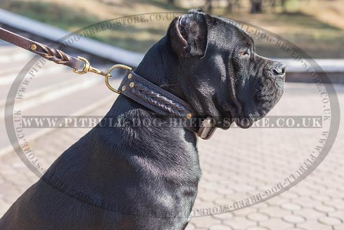 Thick Collar for Cane Corso, Double Leather with Braids