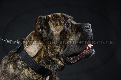 Training Collar for Cane Corso, Nylon with Quick-Release Buckle