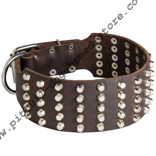 Wide Dog Collar with Studs for Pitbull, Staffordshire and Bully