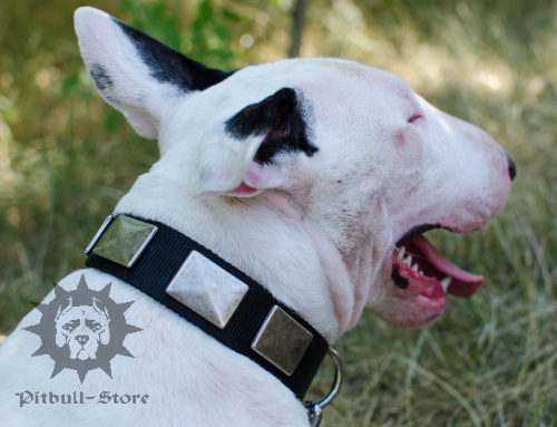 Bull Terrier Collar for Walking, Nylon with Nickel Plates