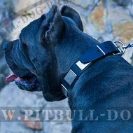 Leather Collar for Cane Corso with War Style Plates