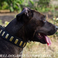 Trendy Dog Collar with Brass Plates for Pitbull and Amstaff