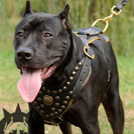 Luxury Leather Dog Harness, Studded and Nappa Lined for Staffy