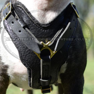 Padded Dog Harness Leather for Strong English Bull Terrier