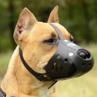 Staffordshire Bull Terrier Muzzle UK