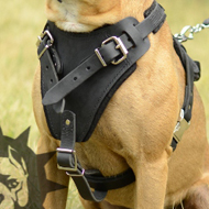 Protection Dog Harness Bestseller for Stafford Attack Training