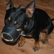 Staffordshire Bull Terrier Muzzle, Leather Nappa Padded
