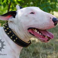 Luxury Leather Dog Collar Spiked & Nappa Padded for Bull Terrier