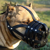 Leather Dog Muzzle Royal Nappa Padded for Pitbull Comfort