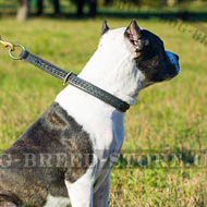 Leather Choke Collar of Braided Design for Active Pitbulls