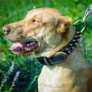 Brand Padded Dog Collar for Daily Walks in Style