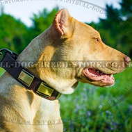 Fancy Dog Collar with Cool Adornments of Unusual Texture