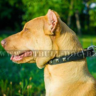 Studded Dog Collar for Pitbull Walks in Style