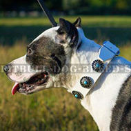 White Leather Dog Collar Decorated with Blue Stones