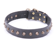 Dog Training Collar with Pyramids for Bull Terrier & Amstaff