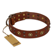 """Unfailing Charm"" FDT Artisan Tan Pit Bull Dog Collar with Studs"