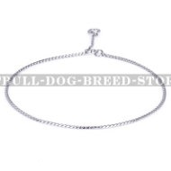 Pitbull Dog Chain Collar for Rings and Shows Only