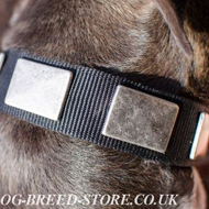Pitbull Collar of Nylon with Wide Nickel Plates for Everyday Use
