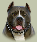 Pitbull Spiked Collar