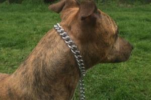 Pitbull Dog Choke Collar