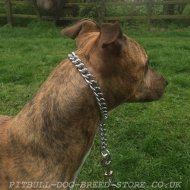 Best Dog Chain Collar for Pitbull Control, Chrome Plated Steel