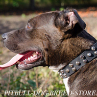 Quality Dog Collar of Leather with Nickel Pyramids for Pitbull