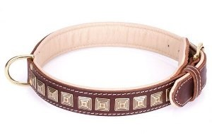 Pitbull Dog Collars for Sale