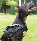 Leather Pitbull Harness for Pulling