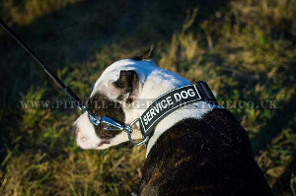 Pitbull Dog Lead