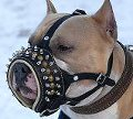 Pitbull Leather Muzzle with Spikes